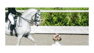 Equestrian Business Ideas 1 Horsebox Finance 1